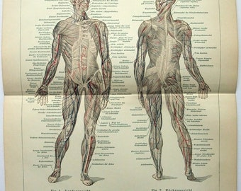 Original 1907 Print - Human Muscles by Meyers. Anatomy. Oddity Antique