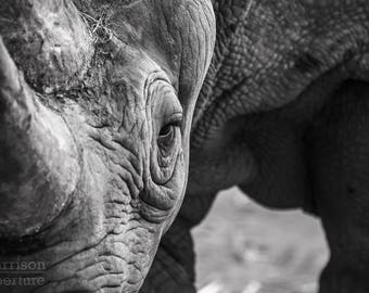 The Black Rhino | Black and White Print