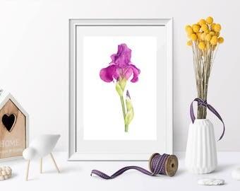 Iris, Watercolor Art, Digital Print Download, Botanical Art, Flowers