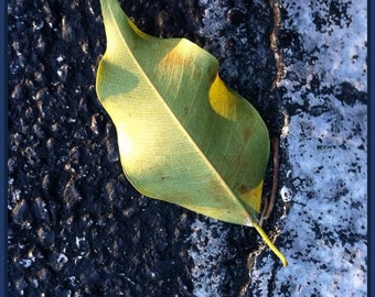 Leaf. Photography. Digital Download. Art.