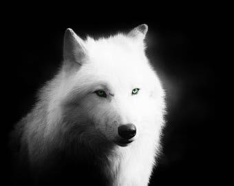 Art photo of a White Wolf