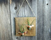 Air Plant Hanging Wood Plaque with Copper Holders and Two Air Plants Perfect Gift