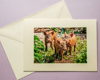Three little pigs - all occasion greeting card
