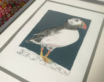 A Giclee print of an original artwork of a Puffin, dry point etching and acrylic ink.