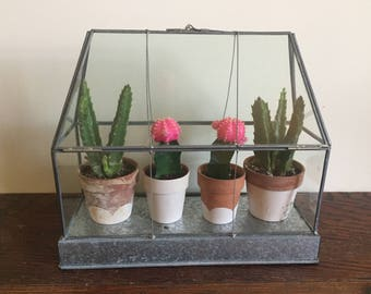 Unique glass and metal greenhouse