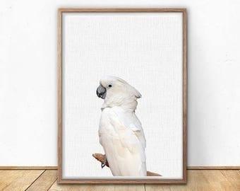 70 Off Cockatoo Printable Nursery Wall Decor Parrot Print Wall Decor Animals Parrot Decor Kids