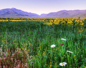Adirondack Mountain Photograph, Country Landscape, Wildflower Photography, Lake Placid, Fine Art Print, Gift Idea, Country Living