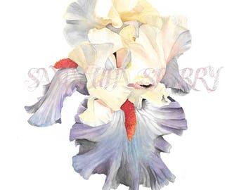 "Watercolor Flower | Print of painting ""Bearded Iris III"" | Iris | Botanical print | Valentine's gift | Home decor"