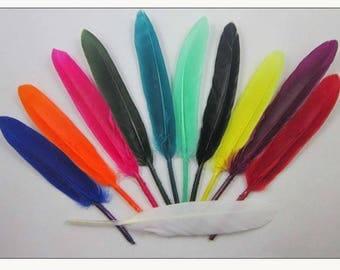 MAXI (PROMO) set of 50 various 102 P confections premium feathers