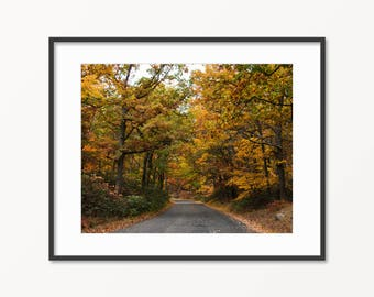 Fall Foliage Road Print. Autumn Leaves. Bear Mountain State Park. Hiking Hudson Valley. Westchester, NY. Fall Nature Photography.