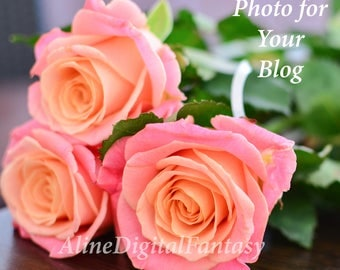 Stock Photo, Instagram photo, Photo for blog, Digital photo, Digital Roses, flower gift girls