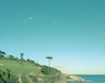 Seascape Tree Fine Art Photography, Blue Sea Blue Sky, Lush Green Field, landscape Tree Decor, Summer Beach Print Square print
