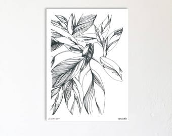 A4 Edition botanical print limited and numbered - drawing Illustration handmade - Ctenanthe - monotyledone