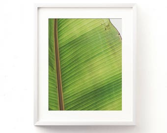 tropical photography, banana leaves art, tree photo, leaf print, green, California art, banana leaf print, modern photography, printable