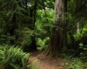 Woodland Fantasy Forest Digital Backdrop