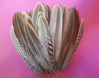 Pheasant wing feathers