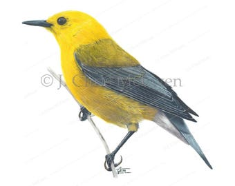 Pronthonotary Warbler