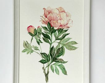 Peony Painting  Flower watercolor  Original Watercolor painting  Peony Watercolor  Botanical painting  Flowers painting