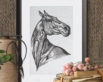 Horse machine embroidery design - 6 sizes