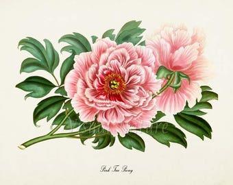 Pink Tree Peony Flower Art Print, Botanical Art Print, Flower Wall Art, Flower Print, Floral Print, Pink Peony Art Print