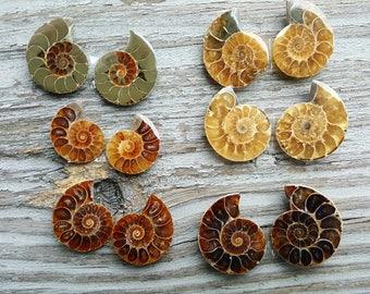 12 Ammonite Halves  (6 whole)