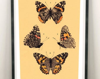 Botanical Butterfly A4 Print