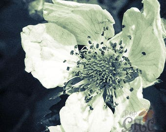 White Vintage floral photography nature photo wall decor flower signed by Redstreake
