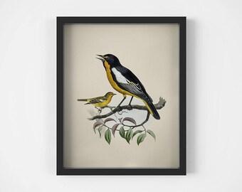 Wall art 8x10, Bird decor, Print vintage, Birds wall art, Animal antique print, Digital download art, Printable wall decor, Gift print JPG