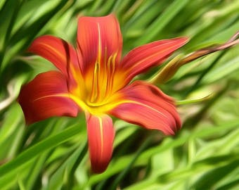 Digitally Enhanced 8x10 Photo Print - Day Lily