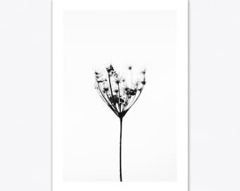 Dandelion Print, Dandelion Art, Nature Print, Nature Wall Art, Flower Print, Flower Art, Botanical Print, Minimalist Print, Minimalist Art