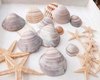 Shell & Starfish in the set Sommerdeko