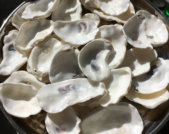 46 oyster shell name place settings