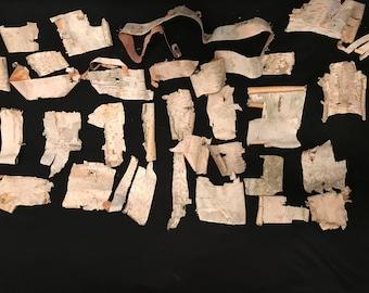 White Birch Bark (30 pieces)