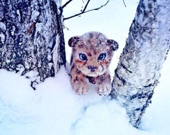 baby leopard Leo