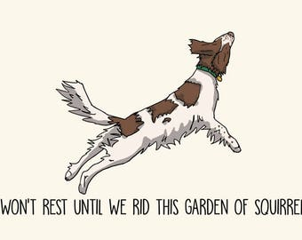 Springer Spaniel Greetings card: I won't rest until we rid this garden of squirrels