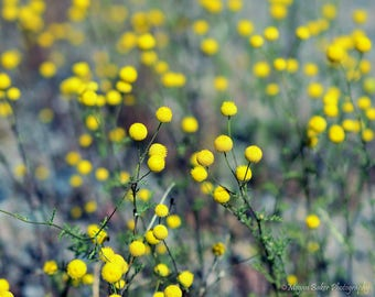 Field of Yellow flowers photography, digital download, printable photo, wall art, wild flower photo, yellow flower photo, botanical photo