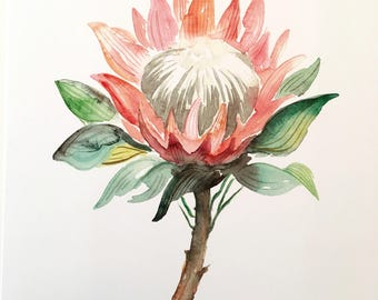 King Protea Floral Watercolor Print