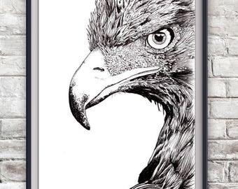 Eagle Illustration Print - Golden Eagle, American Bald Eagle, Bird