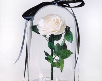 Beauty and the Beast Rose in glass dome, live forever rose, preserved rose, eternal rose, enchanted rose, Belle Rose, Rose That last a year
