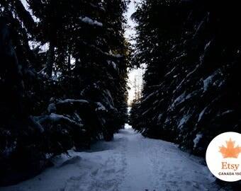 Canada 150+, EtsyCA150+, Forest Trail Photograph, wall art wall decor home decor nature photography, canada 150, forest mountain winter