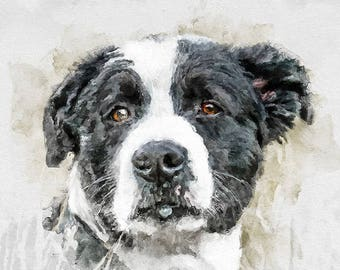 Dog watercolor portrait, original pet portraits, animal art, pet portraits, pet portrait, custom dog portrait.