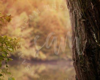 Autumn Creamy Digital backdrops, digital background, Dreamy background, Forest background, Forest backdrop, Autumn backdrop background
