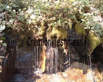 Nature photograph - Moss Fall