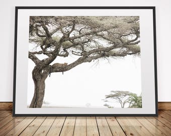 Leopard in a tree . Big cat . Tanzania, Africa . Digital Download Photography . Printable in various sizes 5x4, 8x10, 16x20