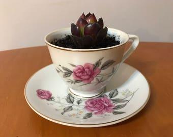 Floral teacup succulent