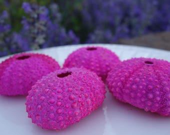 Bright Pink Sea Urchin (4) Home Decor or Wedding Decor