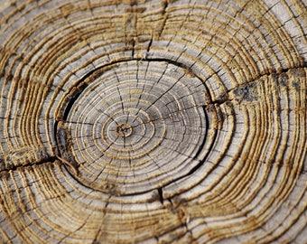 Tree Rings | Photo print