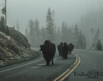 American Bison Herd, Yellowstone National Park, Nature Photography, Fine Art Print, Home Decor, Landscape Photography, Nature