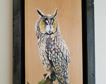 Alan the Owl