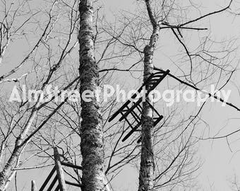 Chairs in Trees, Nature, Black and White, Wall Art